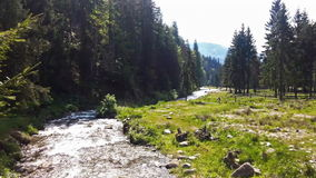 River flowing in a beautiful forest stock footage