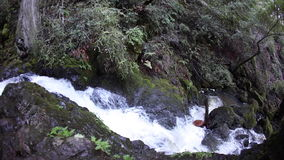 River Flowing Through California Forest. A river runs over rocks and through a healthy forest near Point Reyes National Seashore in northern California stock footage