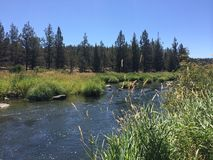 River. A river flowing downstream in eagle crest oregon Royalty Free Stock Image