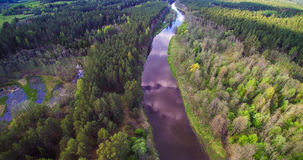 River flowing through forest Royalty Free Stock Photos