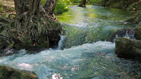 River Flowing in the Forest stock footage