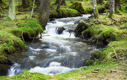 River Flowing in the Forest Landscape Stock Images