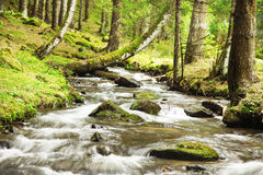 River Flowing in the Forest Landscape Stock Photos