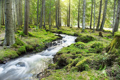 River Flowing in the Forest Landscape Royalty Free Stock Images