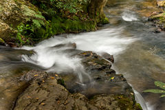 River Flowing Through the Forest. Small River located in the interior of Brazil Flowing through the Forset Stock Images