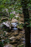 The river. Flowing through the forest in Sokobanja, Serbia Stock Images
