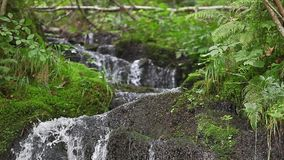 River flowing in the forest, stock footage Stock Images