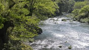 River flowing. Beside fresh green trees in Kagoshima stock video footage