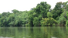 River flowing gently through forest view of allow big green trees growing in the tropical at thailand. River flowing gently through forest view of allow big stock footage