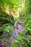 River flowing through a gorge Stock Photos
