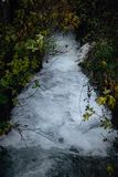 River flowing through green in autumn stock photo