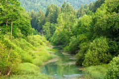 River flowing through the green forest Royalty Free Stock Photo
