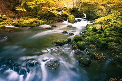 River Flowing through Green Mossy Rocks in Park Forest with End royalty free stock image