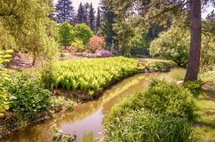A river flowing between heathers in the park. royalty free stock photo