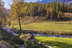 Alpe devero autumnal mountain landscape. A river flowing inside the Alpe Devero flat land with larches and pines trees in the background stock image