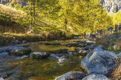 Alpe devero autumnal mountain landscape. A river flowing inside the Alpe Devero flat land with larches and pines trees in the background royalty free stock images