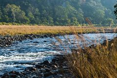 River flowing at Corbett. River flowing at Jim Corbett National Park Royalty Free Stock Photo