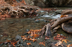 River flowing  between leaves and trees Royalty Free Stock Photography