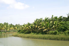 River flowing in the midst of green palm trees Royalty Free Stock Photography