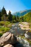 River flowing through a mountain forest. Stock Images