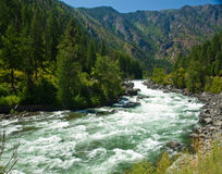 A River Flowing Through a Mountain Forest Royalty Free Stock Photography
