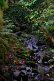 River flowing over rocks in the moss filled green fall woods royalty free stock photos