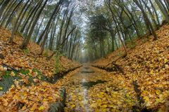 A river flowing in a ravine. Leaves of deciduous trees fall to t royalty free stock images