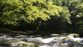 River flowing rock slope. Under flesh green painted maple tree stock video