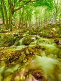 River flowing through rocks Royalty Free Stock Photo