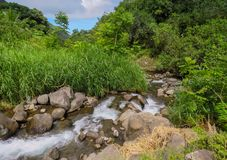 River stream flowing on rocks through green forest, Iao Valley State Park, Hawaii royalty free stock images