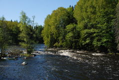 River Flowing in the Spring. A river flowing through the trees on a spring day Stock Photography