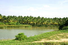 River flowing through tropical area Stock Photography