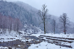 River flowing trough the forest on wintertime Stock Images