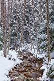 River flowing trough the forest on wintertime Royalty Free Stock Photography