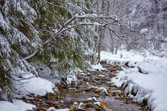 River flowing trough the forest on wintertime Stock Photo