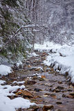 River flowing trough the forest on wintertime Stock Photography