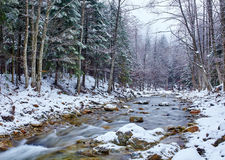 River flowing trough the forest on wintertime Royalty Free Stock Images