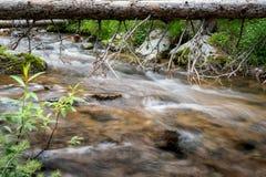 River flowing under fallen log stock photo