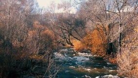 A River Flows Alongside Leafless Trees in a Beautiful Scene in Autumn stock video