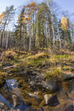 The river flows in the autumn wood on rocks in moss Stock Photo