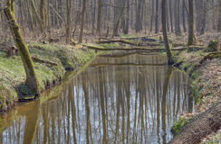 The river flows through the deciduous forest Royalty Free Stock Images