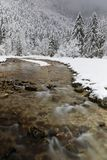 A river flows through the firs. In a winter landscape of French Alps range of Chartreuse stock photography