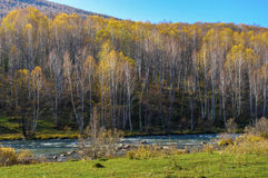 The river flows at the foot of the mountain, covered with birch forest Stock Photos