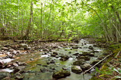 River flows through a forest Stock Photography