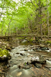 River flows through a forest Stock Images