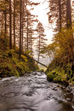 River flows through a forest and over the ege Royalty Free Stock Photo