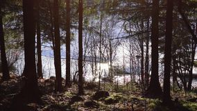 River flows in the forest in spring stock video footage