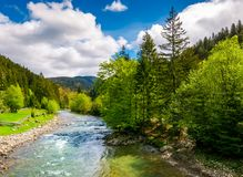 River among the forest in picturesque Carpathian mountains in sp. River flows among of a green forest at the foot of the mountain. Picturesque nature of rural Royalty Free Stock Photo