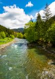 River among the forest in picturesque Carpathian mountains in sp. River flows among of a green forest at the foot of the mountain. Picturesque nature of rural Stock Photos