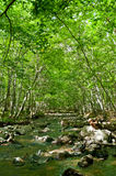 River flows through a magical green forest Stock Photography